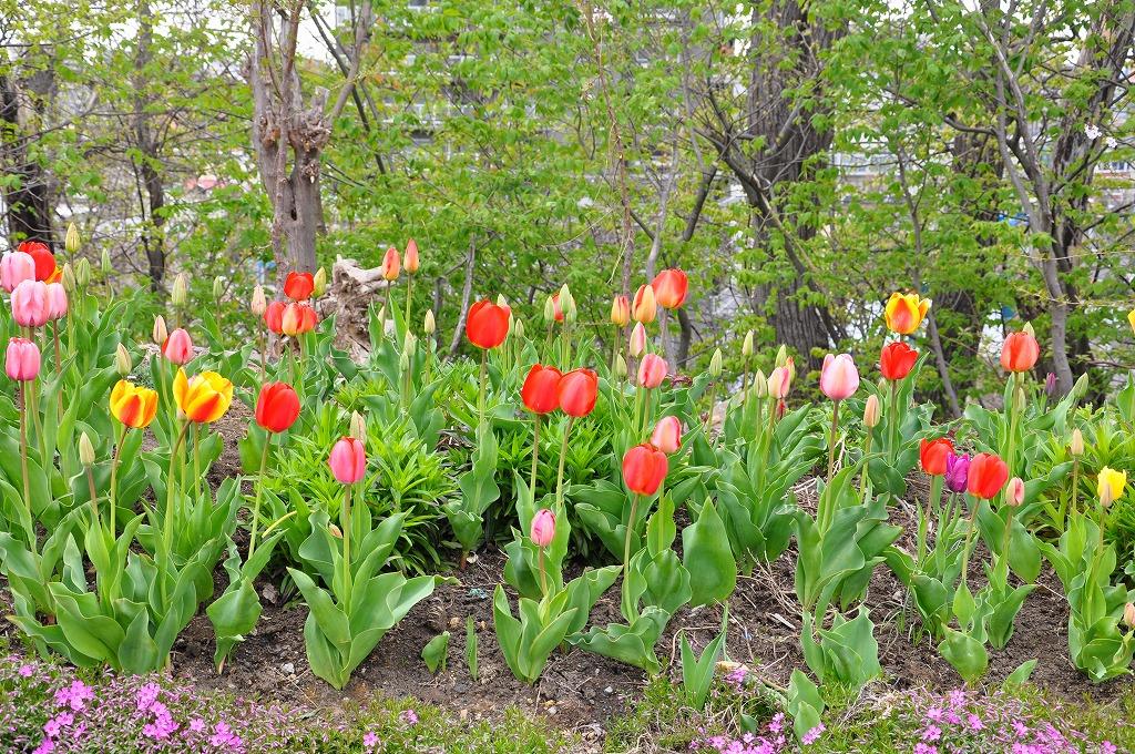 花壇の花々その3