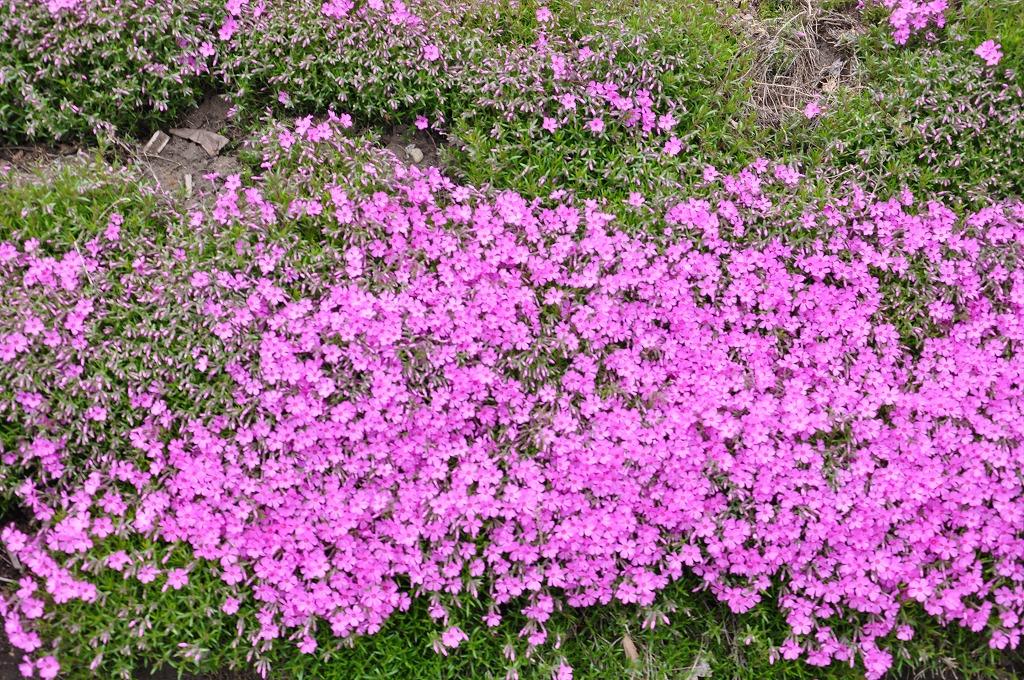 花壇の花々その4