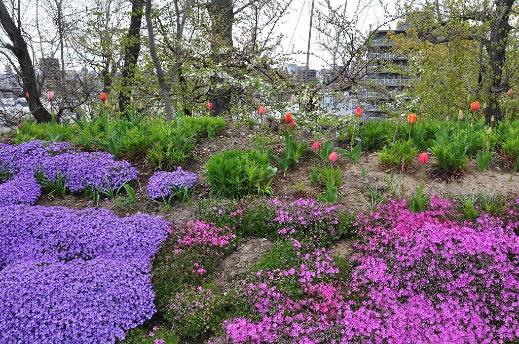 花壇の花々その6