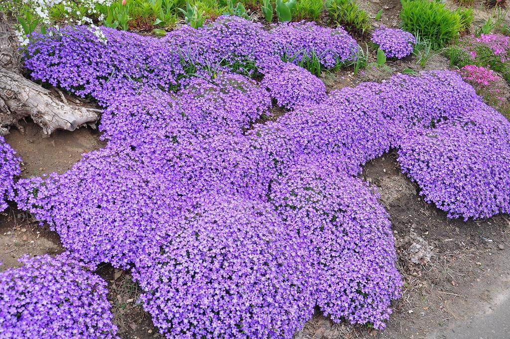 花壇の花々その7