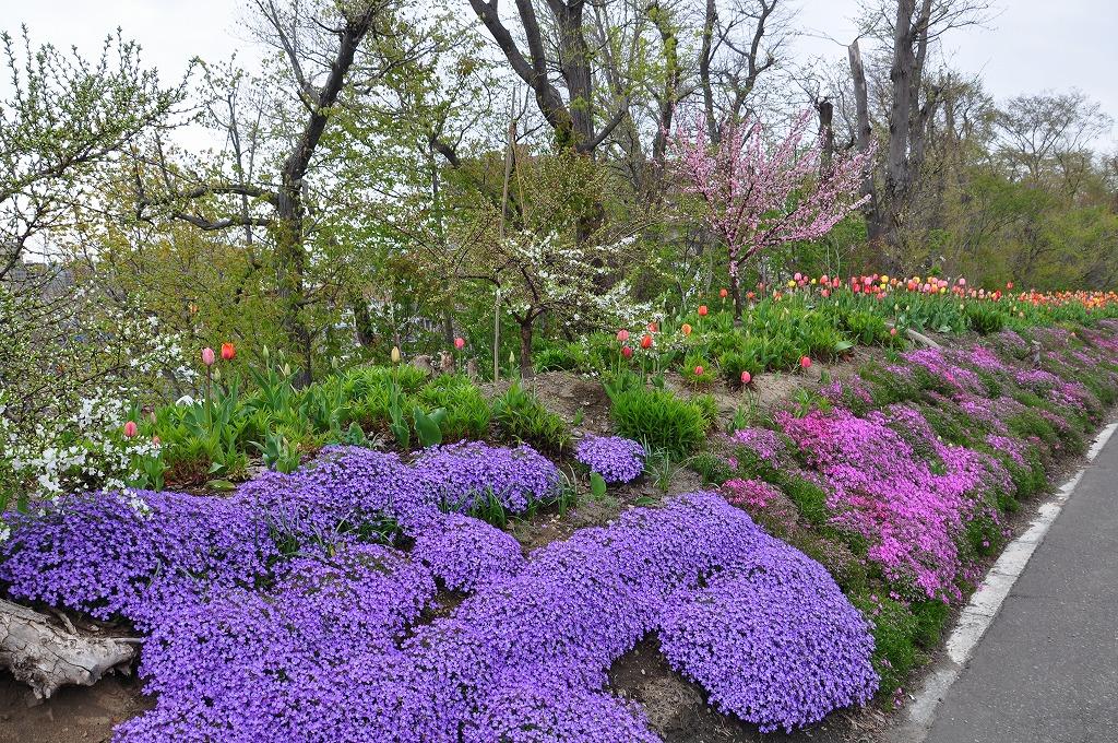 花壇の花々その8